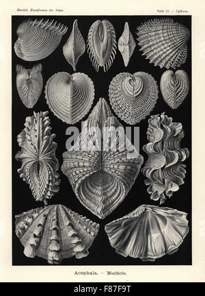 Bivalvia clam shells: Venus clam, Hysteroconcha dione 1-3, spiny cockle, Acanthocardia aculeata 4,5, heart cockle, - Stock Photo
