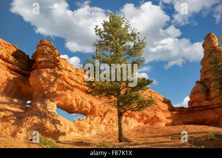 Arches along Mossy Creek Trail. Bryce National Park, Utah - Stock Photo