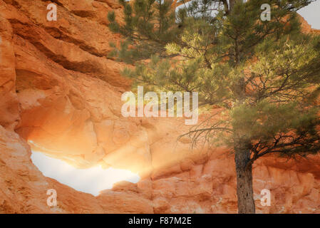 Rock Arches with tree and sunset. Bryce National Park, Utah - Stock Photo