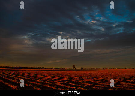 Gossolengo, tomato's field - Stock Photo