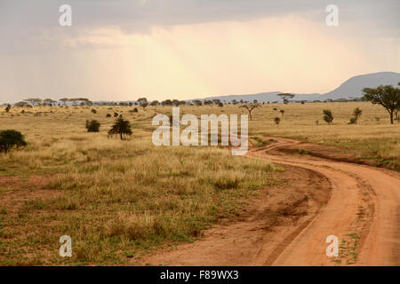 A dirt road winds through the African savannah - Stock Photo