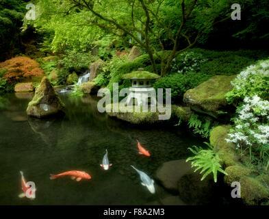 koi in pond with japanese lantern and waterfalls japanese gardens portland oregon