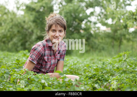 Teenager girl working in field of potato - Stock Photo