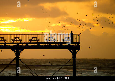 Aberystwyth Wales UK, Tuesday 08 December 2015  A person watches as a flock of starlings perform displays in the - Stock Photo