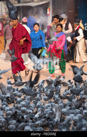 A group of pigeons in Kathmandu - Stock Photo