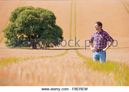 Farmer standing with hands on hips in sunny rural barley crop field - Stock Photo