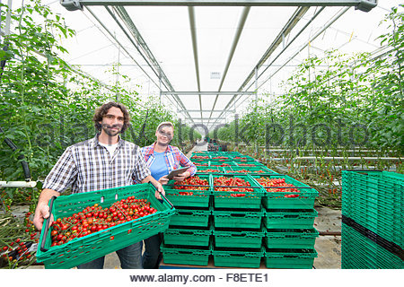 Portrait confident growers carrying crates of ripe red vine tomatoes in greenhouse - Stock Photo