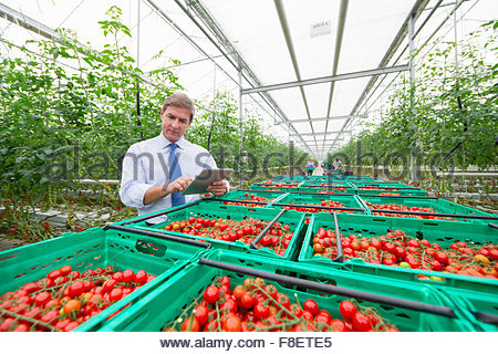 Businessman with digital tablet inspecting crates of ripe red vine tomatoes in greenhouse - Stock Photo