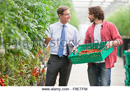 Businessman and grower discussing ripe vine tomatoes in greenhouse - Stock Photo