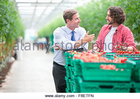 Businessman and grower discussing ripe tomatoes in crates in greenhouse - Stock Photo