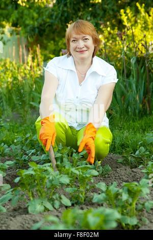 Mature woman working in field of potato - Stock Photo