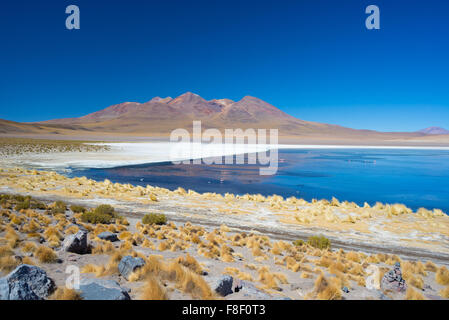 Wide angle view of 'Laguna Honda', a frozen salt lake with flamingos on the way to the famous Uyuni Salt Flat, among - Stock Photo