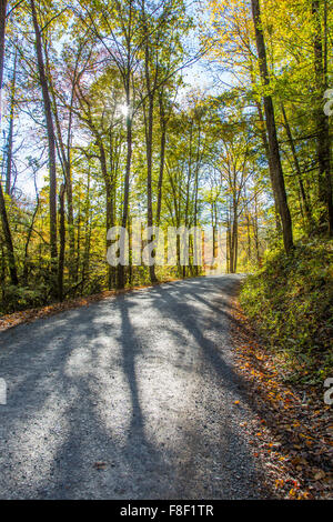 Early morning sun in woods on dirt gravel road into Greenbrier area of Great Smoky MOuntains National Park in Tennessee - Stock Photo