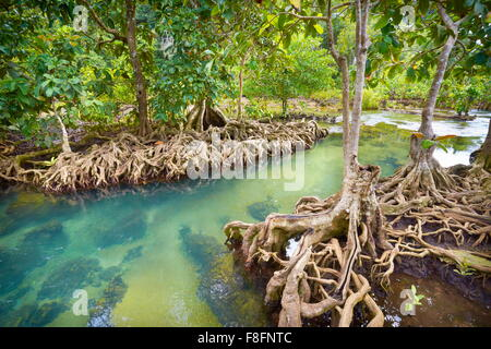 Thailand - mangrove forest in Tha Pom Khlong Song Nam National Park - Stock Photo
