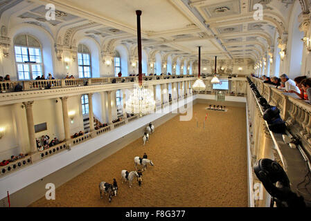 Morning training in the Spanish Riding School, in Hofburg palace, Austria, Vienna. - Stock Photo