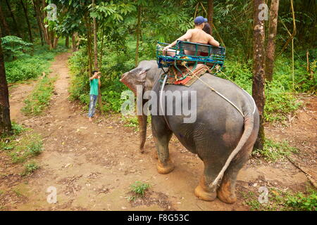 Elephant ride in tropical forest, Khao Lak National Park, Thailand - Stock Photo