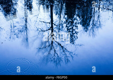 Reflection of bare trees in rippling water - Stock Photo