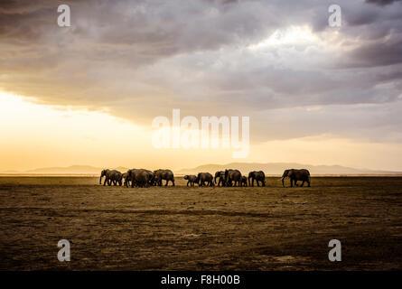 Herd of elephants in savanna landscape - Stock Photo