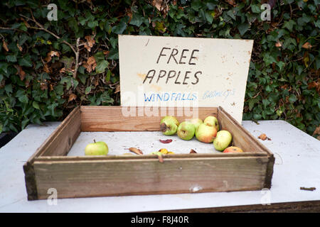 Windfall Bramley Apples offered free to passersby. - Stock Photo