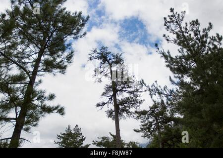 Low angle view of silhouetted trees against sky - Stock Photo