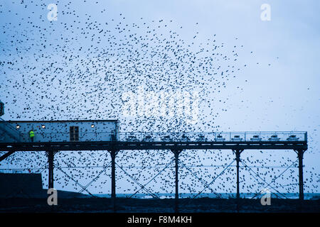 Aberystwyth Wales UK, Monday 07 December 2015 A huge flock of starlings perform spectacular displays in the air - Stock Photo