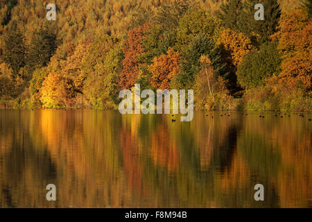 Colourful deciduous forest in autumn, Lake Sorpesee, Langscheid, Sauerland, North Rhine-Westphalia, Germany, Europe - Stock Photo