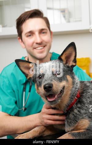Vet Examining Dog In Surgery - Stock Photo