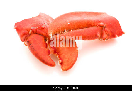 Claws of a Cooked European Common Lobster isolated on a white studio background. - Stock Photo