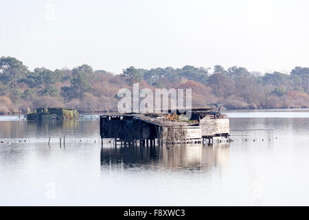 In Autumn amidst a dozen of others, a duck hunting hut on the White Pond, at Seignosse (Landes - Aquitaine - France). - Stock Photo