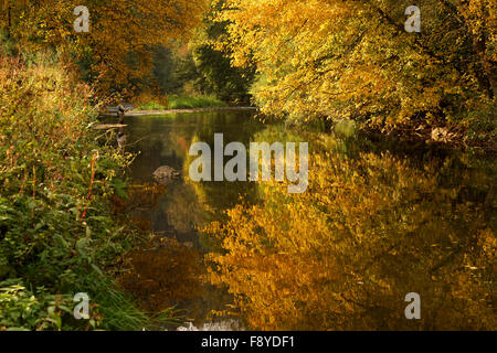 Colourful deciduous forest in autumn, Nagold River near Bad Liebenzell , Germany, Europe - Stock Photo