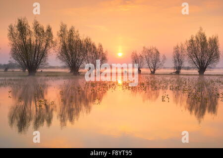 Sunrise landscapes at Biebrza National Park, Poland - Stock Photo