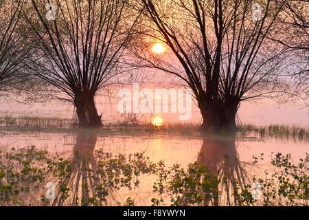 Sunrise at Biebrzanski National Park, Podlasie region, Poland - Stock Photo
