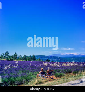 Couple in armchairs admiring landscape, blooming lavender field and Mont Ventoux mount, Vaucluse, Provence, France, - Stock Photo