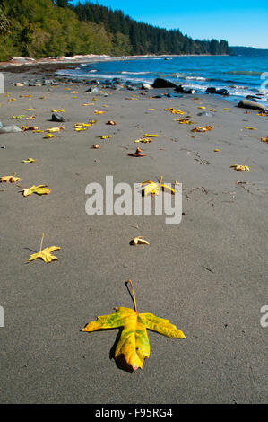Sandcut beach trail, part of the Juan de Fuca trail on the West Coast of Vancouver Island, is a sandy protected - Stock Photo