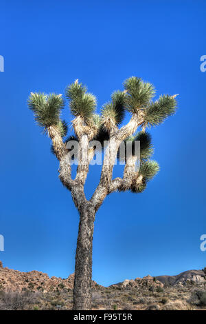 Joshua Trees and Rock Formations, Joshua Tree National Park, Calif. USA - Stock Photo