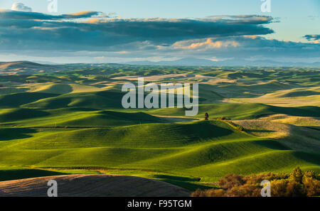 Scenic Rolling hills in The Palouse Scenic Byway, located in the heart of the Palouse region in southeastern Washington, - Stock Photo