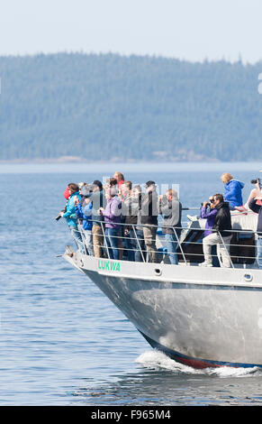 Whale watchers cruising through the waters of Johnstone Strait look for Killer Whales in their natural habitat aboard - Stock Photo