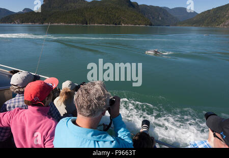 Visitors aboard a Whale Watching boat catch of glimpse of the ever playful Pacific White Sided Dolphin enroute through - Stock Photo