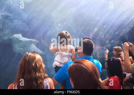 People watching a polar bear swimming underwater at the Journey to Churchill, Assiniboine Park Zoo, Winnipeg, Manitoba, - Stock Photo