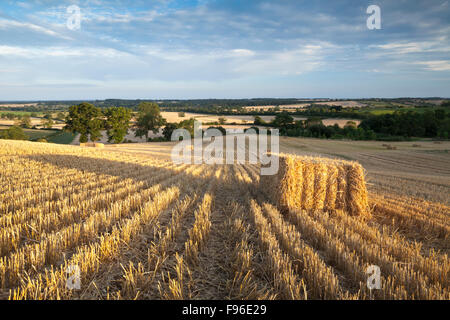A field of harvested bales with long shadows cast by the low-angled evening sun near East Haddon, Northamptonshire, - Stock Photo