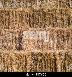 Fresh hay bales stacked for background - Stock Photo