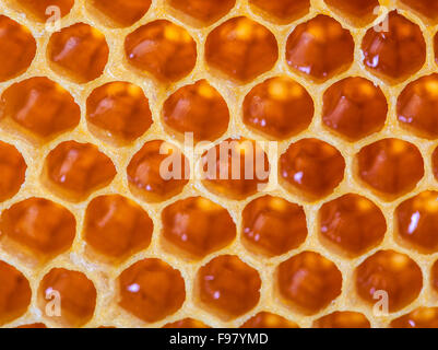 Fresh Honeycomb close up macro - Stock Photo