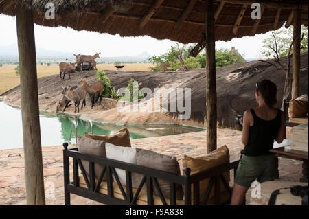 Defassa waterbuck at Apoka Lodge swimming pool (Kobus ellipsiprymnus defassa), Kidepo Valley National Park, Uganda - Stock Photo