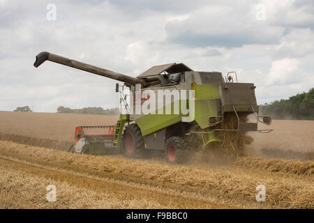 Summer farm work  - an agricultural machine (Claas combine harvester) is working in a dusty wheat field at harvest - Stock Photo