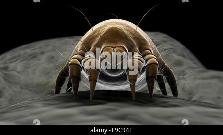 Microscopic visualization of a dust mite. - Stock Photo