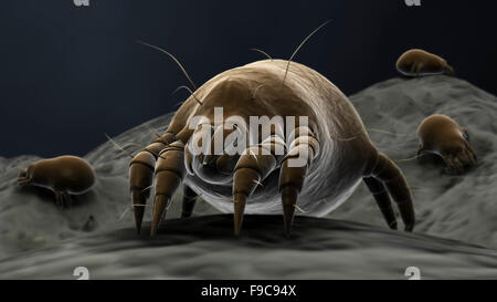 Microscopic visualization of dust mites. - Stock Photo