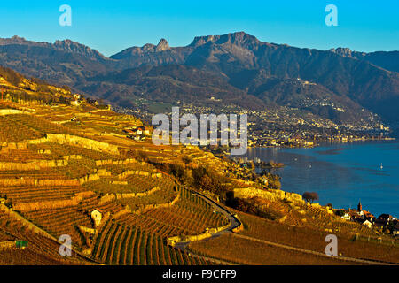 Autumn in the Riviera vaudoise at lake Leman, view across the Lavaux vineyards towards Vevey, Chexbres, Vaud, Switzerland - Stock Photo