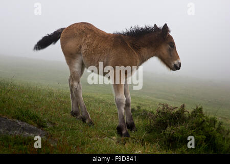 A colt called Miracle - Stock Photo