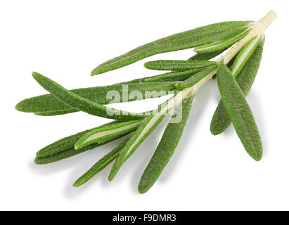 Single fresh rosemary twig isolated on white background - Stock Photo