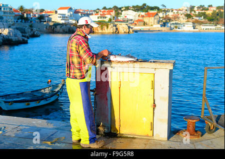 Man cleaning the fish on a pier in Cascais. Cascais is a coastal town, 30 km of Lisbon. Portugal - Stock Photo